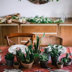 Inspiración_Decorar con cactus_Iconscorner